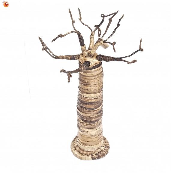 Baobab 50 cm